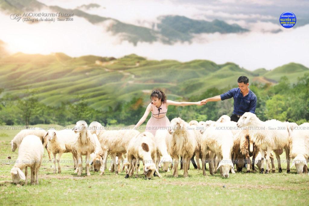 Ảnh cưới đàn cừu Nguyễn Tú